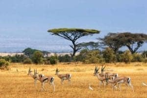 gazelle companies